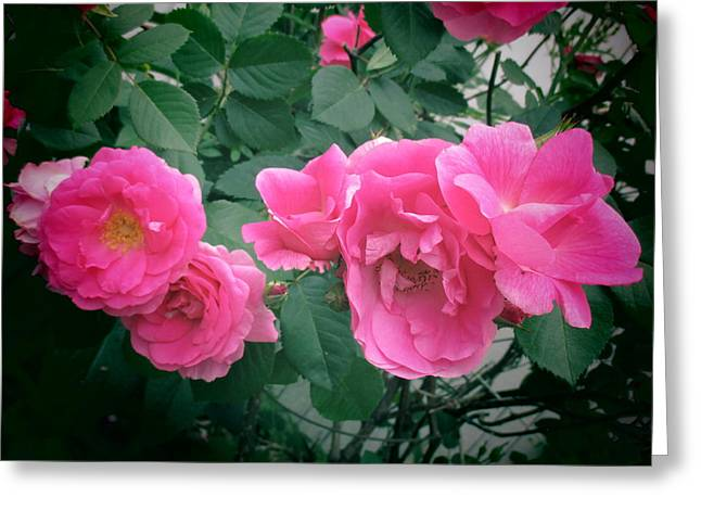 June Rose II Greeting Card