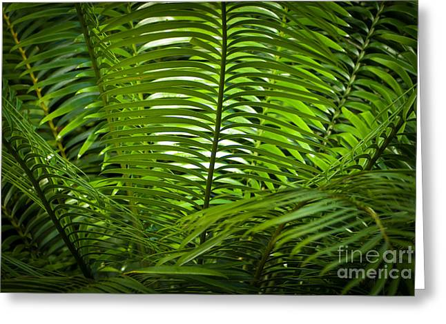 Jungle Fern Greeting Card