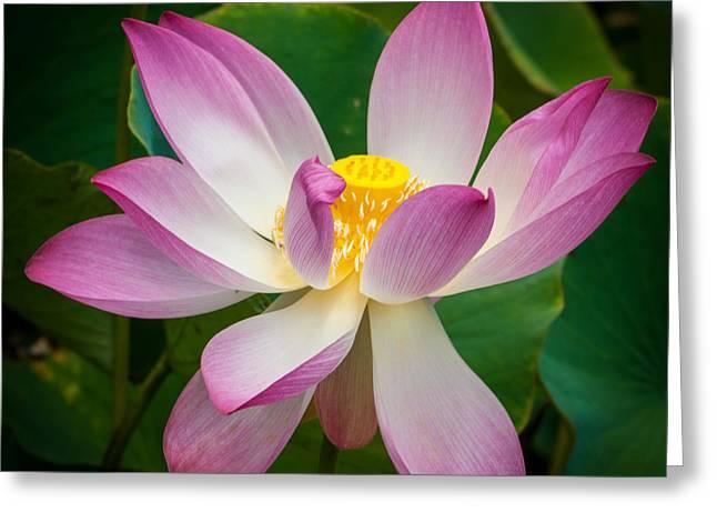 Jungle Garden Flower Greeting Card