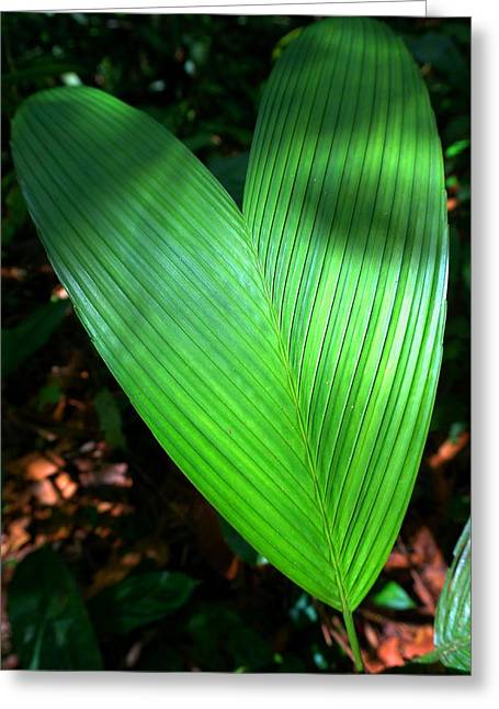 Jungle Heart Greeting Card