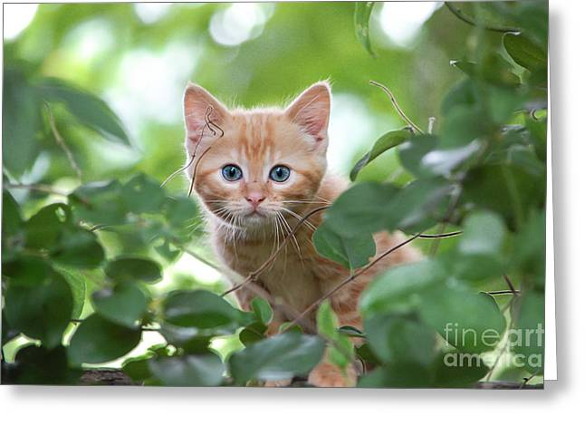 Jungle Kitty Greeting Card