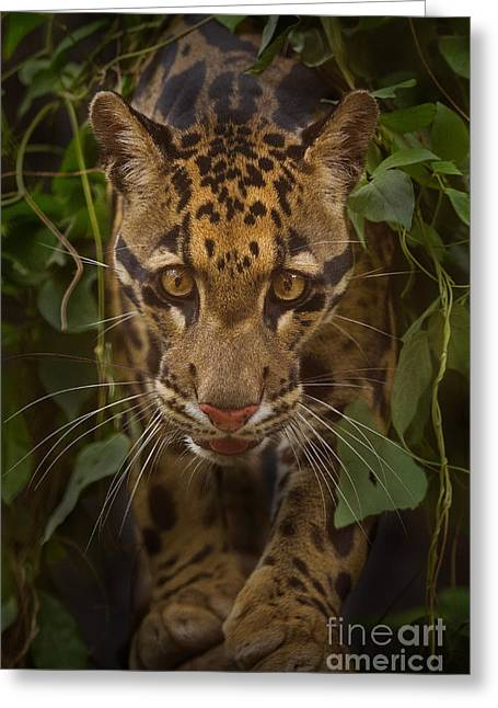 Jungle Prince Greeting Card by Ashley Vincent