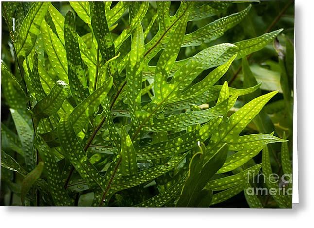 Jungle Spotted Fern Greeting Card