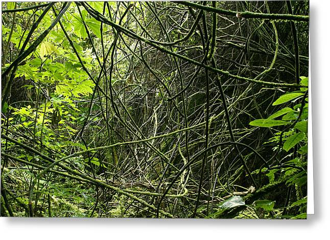 Jungle Vines Greeting Card by Les Cunliffe