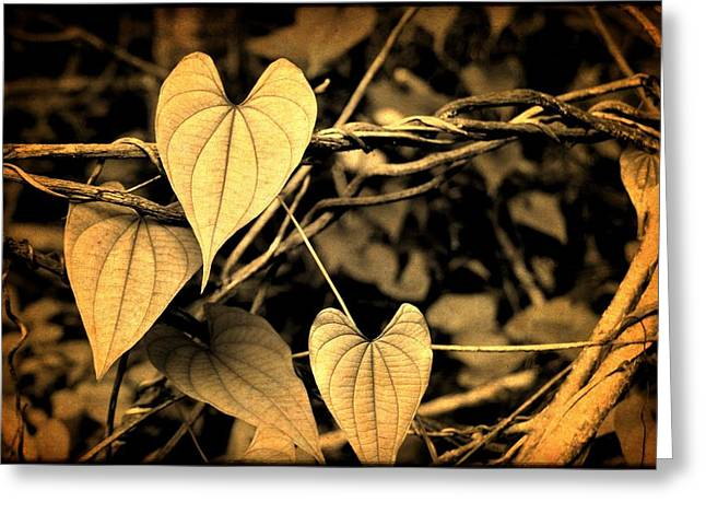 Jungle Vines Greeting Card