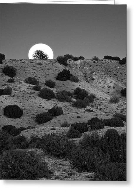 Greeting Card featuring the photograph Juniper At Moonrise by Mary Lee Dereske