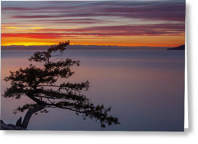 Juniper Point Greeting Card by Jacqui Boonstra