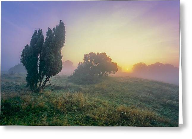 Juniper Trees In Early Morning Fog  Greeting Card by Martin Liebermann