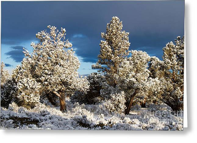 Juniper Trees In Snow Greeting Card by Chris Scroggins