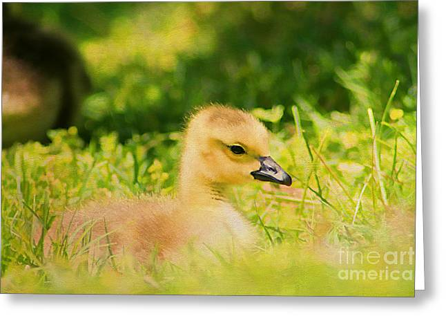 Just A Baby Greeting Card by Darren Fisher