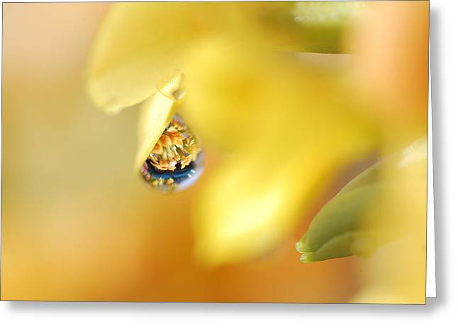 Just A Drop Of Spring Greeting Card