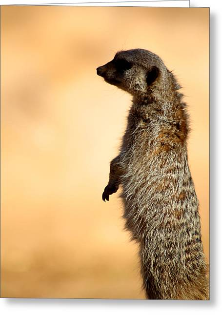 Just A Meerkat Greeting Card by Dick Botkin