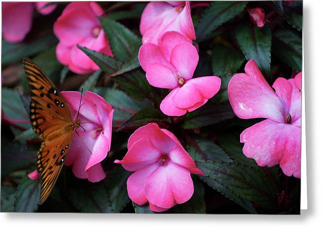 Greeting Card featuring the photograph Just A Small Taste For This Butterfly by Thomas Woolworth