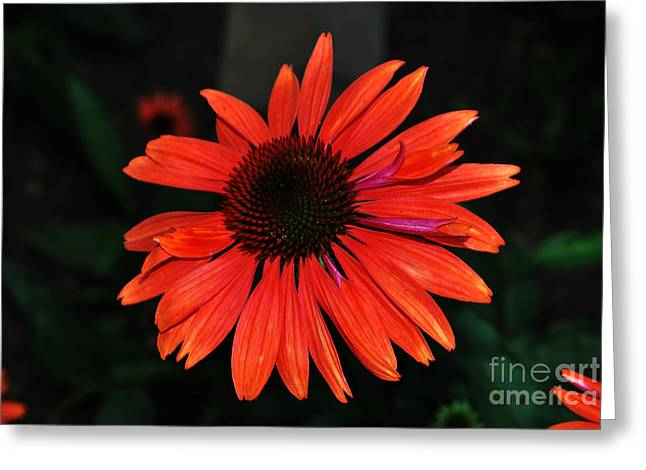 Just As Pretty Greeting Card by Judy Wolinsky