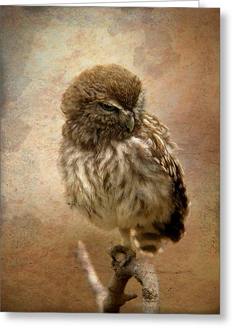 Just Awake Little Owl Greeting Card by Perry Van Munster