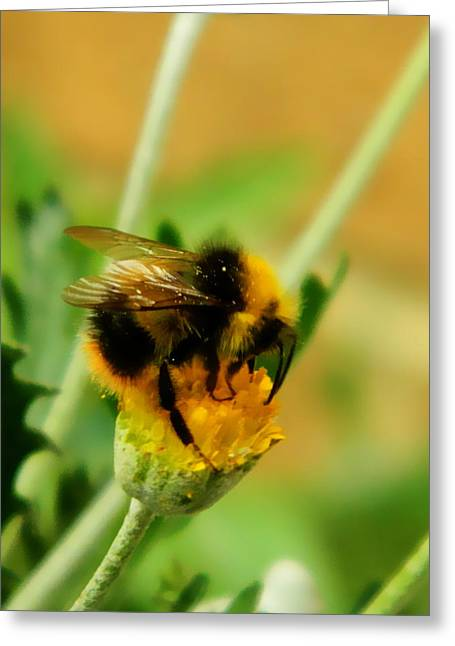 Just Being A Bee Greeting Card by Sharon Lisa Clarke