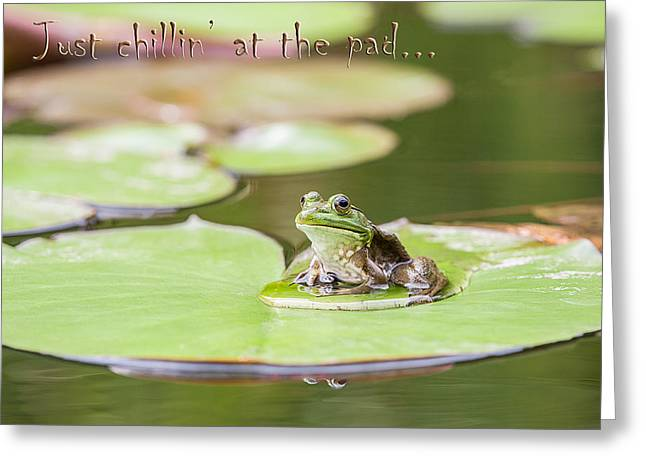 Just Chillin At The Pad Greeting Card by Jeff Abrahamson