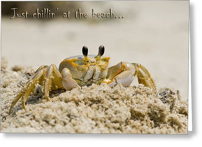 Just Chillin On The Beach Greeting Card by Jeff Abrahamson