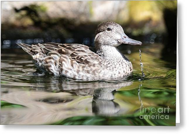 Just Ducky Greeting Card by Carol Groenen