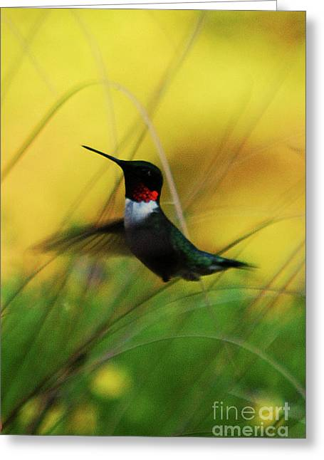 Just Flying Greeting Card by Lori Tambakis