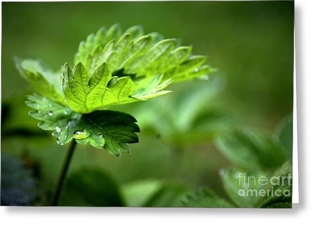 Greeting Card featuring the photograph Just Green by Jeremy Hayden