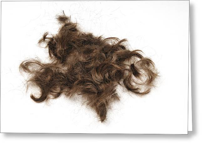 Just Hair Greeting Card