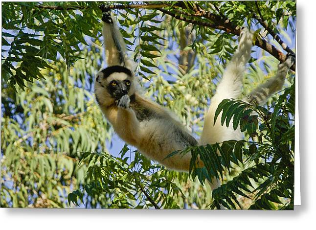 Just Hanging Around Greeting Card by Michele Burgess