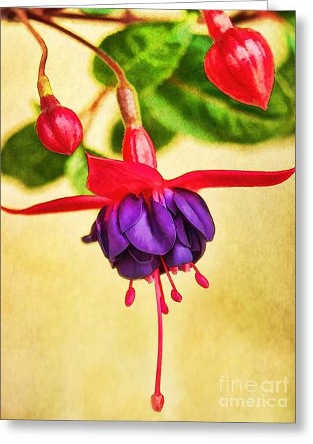 Just Hanging Around Greeting Card by Peggy Hughes