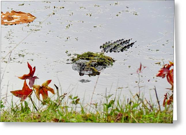 Greeting Card featuring the photograph Just Hanging Out by Cynthia Guinn