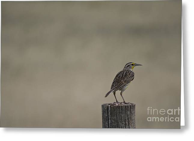 Western Meadowlark On A Fence Post Greeting Card