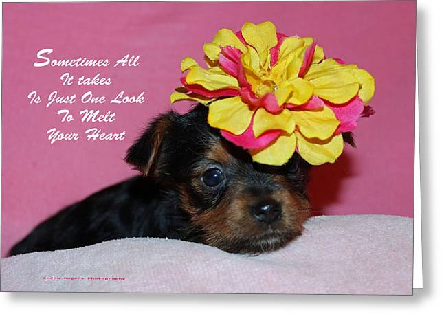 Just One Look Greeting Card by Lorna Rogers Photography