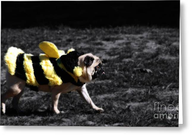 Just Pugging Along At The Speed Of Halloween  Greeting Card by Steven Digman