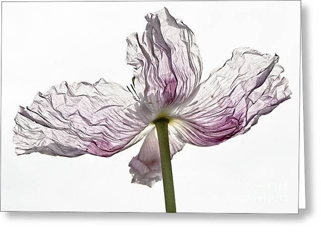 Just Unfolding Greeting Card by Wanda Krack