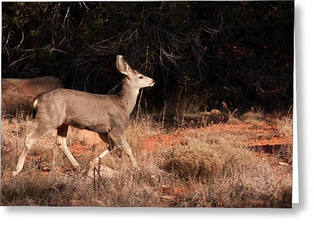 Juvenile Mule Deer Running In Boynton Greeting Card by Jan and Stoney Edwards