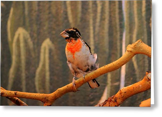 Juvenile Rose Breasted Grosbeak Greeting Card by Larry Trupp