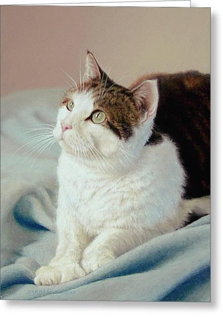K C  Kitty Cat Greeting Card by Barbara Groff