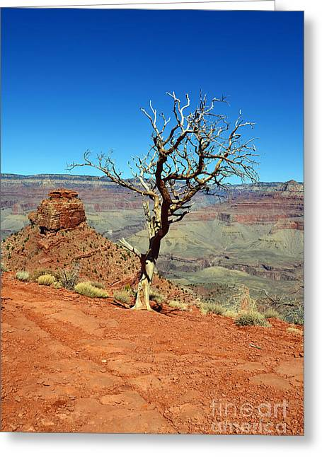 Kaibab Trail Tree And Cap Rock Formation Grand Canyon National Park Greeting Card by Shawn O'Brien
