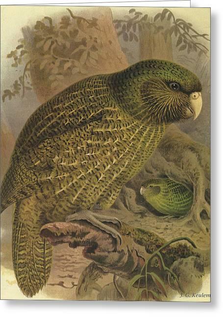 Kakapo Greeting Card by Rob Dreyer