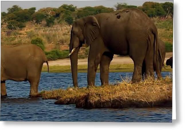 Greeting Card featuring the photograph Kalahari Elephants Preparing To Cross Chobe River by Amanda Stadther