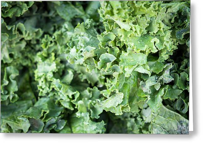 Kale For Sale At A Farmer's Market Greeting Card by Julien Mcroberts