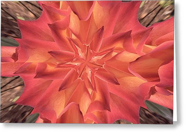 Greeting Card featuring the photograph Kaleidoscope Rose by Michele Kaiser