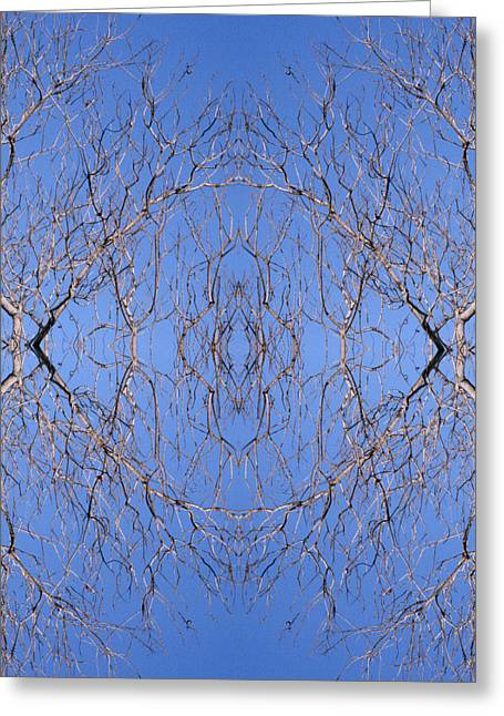 Kaleidoscope - Trees 1 Greeting Card by Andy Shomock