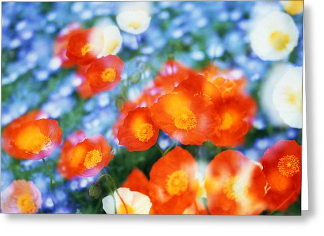 Kaleidoscopic Flowers In Blues, Orange Greeting Card