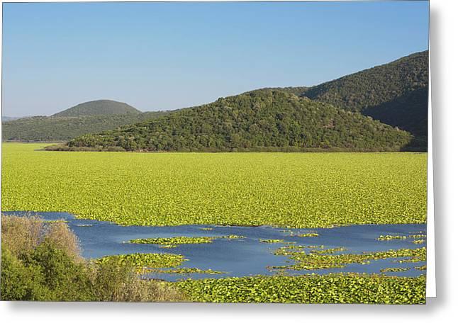 Kalodikiou, Or Kalodiki Lake, Greece Greeting Card by Ken Welsh
