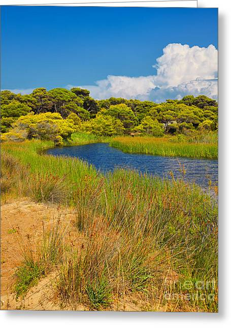Kalogria Forest And Lagoon Greeting Card by Gabriela Insuratelu