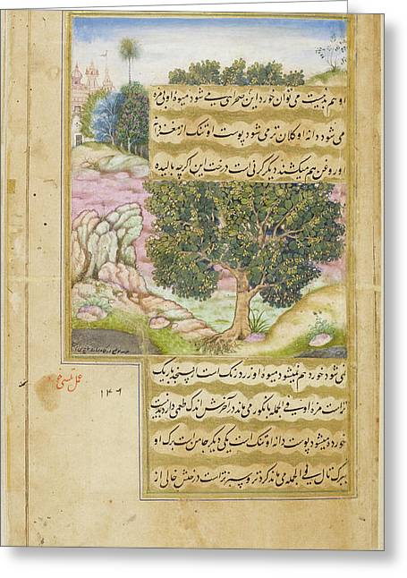 Kami Tree (mimusops Kauki) Greeting Card by British Library