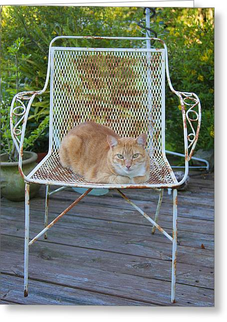 Kamo Kat Orange Tabby Greeting Card
