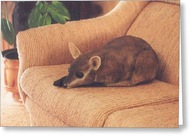 Kangaroo Buddy Sculpture Greeting Card by Arlene Delahenty