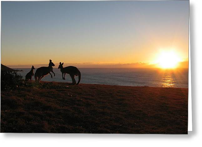 Kangaroo Family Sunset Greeting Card by Andrew Garde Joia