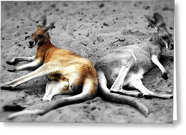 Kangaroo Heart Greeting Card by Andrew Connolly